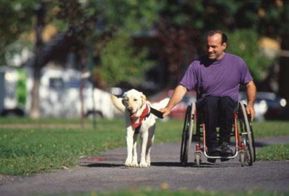 chaise_chien_assistance1